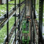 APRIL Film: Vertical Farming — Feeding the Cities of Tomorrow