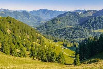 climate change affecting forests